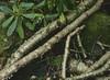 Broken (baro-nite) Tags: westernnorthcarolina birch moss rhododendron blueridgeparkway mediumformat film e6 fujifilm velvia rvp50 pentax 645n smcpentaxa645macro14120mm epsonv700 affinityphoto