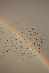 pajaros y arco iris (pedalinpitu) Tags: arcoiris arcodabella