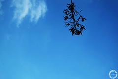 #ChainedToTheSky (NadzNidzPhotography) Tags: cloud weather nadznidzphotography flickrfriday chainedtothesky sky blue bluesky blueskies minimalist minimalism clouds lookup