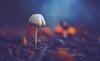Mushroom (Dhina A) Tags: sony a7rii ilce7rm2 a7r2 kaleinar mc 100mm f28 kaleinar100mmf28 5n m42 nikonf russian ussr soviet 6blades mushroom bokeh