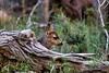 Deer (deepskywim) Tags: reeën zoogdieren dieren springdale utah unitedstates us