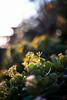ILCE-7M2-04841-20171208-1613-HDR // Minolta MD 50mm 1:1.7 (Otattemita) Tags: 50mmf17 florafauna minolta minoltamdmdiii50mmf17 fauna flora flower nature plant wildlife minoltamd50mm117 sony sonyilce7m2 ilce7m2 50mm cnaturalbnatural ota