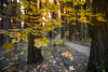 Fall in Yosemite (Nathalie Le Bris) Tags: yosemite fall automne feuille leaf