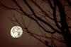 moon seeker (chrisyakimov) Tags: falsecreekcooperativehousingassociation falsecreeksouth vancouver silhouette halloween moon falsecreek yvr autumn fall