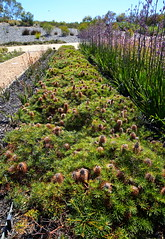 Cranbourne RBG Nov 2017 090 (Graeme Butler) Tags: water landscape history gardens australianplants architecture victoria australia