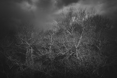 Escape (aveyardphotography) Tags: escape tangled trees dark moody woodland branches forest cold nature arms danger mono monochrome artistic nik silver effex black white blackandwhite clouds cloudy