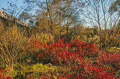 1338__0394FLOP (davidben33) Tags: brooklyn 718 ny quotnew yorkquot quotprospect parkquot autumn 2017 fall trees bushes leaves lake pets gooses ducks water sky clouds colors yellow green blue people quotstreet photosquot