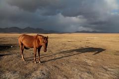 Approaching Storm (peterkelly) Tags: kyrgyzstan digital gadventures centralasiaadventurealmatytotashkent canon 6d songkul songkol cloudy stormy storm horse shadow alpine mountains mountain meadow