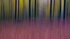Bewegter Herbst (Eric Spies) Tags: herbst bewegt motion blurred blur bewegung unschärfe bewegungsunschärfe autumn icm intentional camera movement abstract fujifilm xt10 xc 1650 art reichswald niederrhein nrw nordrheinwestfalen kleve deutschland germany germania allemagne duitsland intentionalcameramovement wald forest