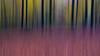 Bewegter Herbst (Eric Spies) Tags: herbst bewegt motion blurred blur bewegung unschärfe bewegungsunschärfe autumn icm intentional camera movement abstract fujifilm xt10 xc 1650 art reichswald niederrhein nrw nordrheinwestfalen kleve deutschland germany germania allemagne duitsland intentionalcameramovement wald forest