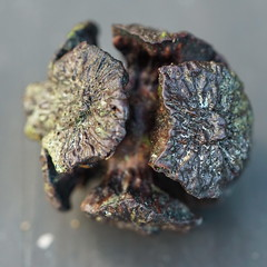 Redwood Cone (pomescarol) Tags: macromondays cone redwoodcone rhyming stonerhymingzone nature