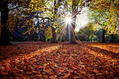 Autumnal Sunburst! 🍂 (Nina_Ali) Tags: 7dwf sunflare sunburst sun autumn leaves nature leicester november england sunstar