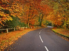 Drive (Andrew H-W) Tags: andrewhaywardwills olympus omd em5markii em5 markii sunrise newforest leaves autumn road colours colors drive 2017 lee filters nd grad graduated 3 1stop