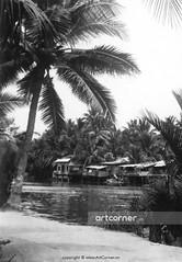 Countryside beauty - Cảnh miền quê - Nha Trang - 1960 (Nguyen Ba Khiem) Tags: 1960s 1960 hìnhảnhxưa việtnam việtnamxưa nhatrang nhatrangxưa nguyễnbámậu phongcảnh quê nước sông dừa