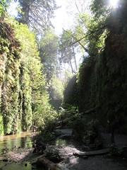 Fern.Canyon.ThomasC (redwoodcoaster) Tags: humboldt redwoods redwood coast national park travel california eurekaca