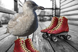 Birds On Wheels