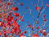 Rojos y azules otoñales (nora2santamaria) Tags: twop rojo red naturalmente