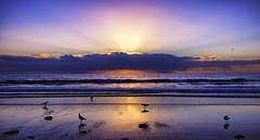 healing prayers (Bec .) Tags: healingprayers adelaide southaustralia bec canon 80d 1022mm henleybeach shore ocean sea water seagulls sunset beautiful raysoflight reflection getwellsoonmum