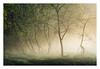Hockham 15 October 2017 (Matthew Dartford) Tags: eastanglia matthewdartford atmospheric backlight backlit branch breakinglight depth england fog foggy forest landscape mist misty morning norfolk tree trees trunk uk woodland woods