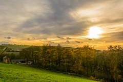 Autumn gold (stevefge) Tags: 2017 autumn beverley uk landscape reflectyourworld sunset sundown sunlight trees bomen hills heuvels fields golden sky cloud wolken herfst