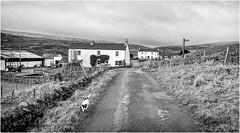 Harwood . (wayman2011) Tags: lightroomfujifilmxpro1fujifilmxf18mmf2 wayman2011 bwlandscapes mono rural farms dogs jackrussels roads pennines dales teesdale harwood countydurham uk