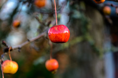 DSC_6346 (upeglau) Tags: herbst cranberry nikon obst brake spaziergang