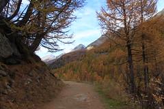 Lötschental (bulbocode909) Tags: valais suisse lötschental montagnes nature sentiers arbres forêts automne paysages vert jaune orange bleu mélèzes