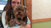 chewie and my niece. january 2016 (timp37) Tags: chewie niece 2016 dog pet january