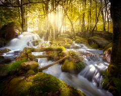 Dream world (BjørnP) Tags: forest waterfall water tree rock wood river landscape nature colors light stream sony bjørkeland peder bjørn egersund norge norway rogaland