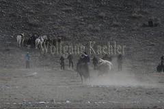 30101806 (wolfgangkaehler) Tags: 2017 asia asian centralasia mongolia mongolian westernmongolia ulgii ölgii bayanulgiiprovince altaimountains altaymountains altaymts goldeneaglefestival people person kazakh competing competition competitor game games horse horseriding horseback horsebackriding horsebackrider traditionalgame kukhbar fighting goatskin kokpar