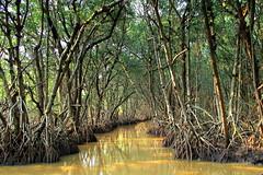 Mangrove forest (PeterCH51) Tags: usa us america florida mangrove forest everglades np nationalpark evergladesnp mangroveforest tropical nature evergladescity peterch51