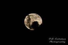 NOV 17 HUNTER'S MOON (OJCPhotoInc) Tags: ojcallahanphotography huntersmoon beavermoon nov17moon nov17beavermoon nov17huntersmoon moon fullmoon lunar lunarphotography astralphotography moonphoto moonphotography miami fl usa