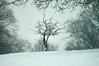 Snow 2017 (tim ellis) Tags: snow suttonpark tree bush birmingham uk
