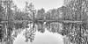 La Chaussée-Tirancourt - Samara - Reflets (roland dumont-renard) Tags: lachausséetirancourt samara parcdesamara somme picardie valléedelasomme étangs arbres reflets hiver
