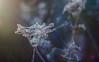 Deep Connection (ursulamller900) Tags: mygarden pentacon2829 spiderweb spinnennetz seeds morningdew morgenlicht bokeh