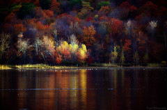 The light of Autumn (Captions by Nica... (Fieger Photography)) Tags: forest fall foliage autumn trees tree reflections reflection water landscape lake colorful colors serene quebec canada outdoor nature
