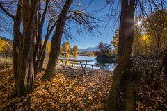 Outside Looking In (writing with light 2422 (Not Pro)) Tags: outsidelookingin happybenchmonday lonelybench leavenworth washingtonstate richborder landscape fallcolors autumn orange yellow sonya77