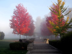 walk in the park (janicelemon793) Tags: rockypointpark portmoody foggy fall autumn leaves trees landscape britishcolumbia greatervancouver