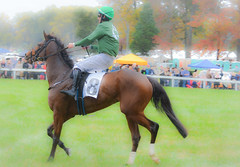 The winner.....(Click for full size) (tomk630) Tags: horse jockey winner autumn beauty colors light rain prize people green trees virginia