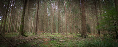 (mak_9000) Tags: woodland nature wideangle