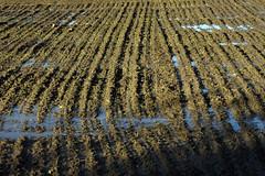 Feld (petra.wruck) Tags: acker feld felder ackerbau landwirtschaft field fields acre agriculture farming agribusiness landschaft landscape landschaften landscapes