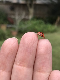 Action macro with my iPhone7Plus - a visitor in my garden Sunday.