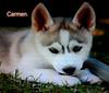 FELÍZ SÁBADO ANIMAL AMIG@S. (CarmenCordero1949) Tags: perro carmen