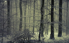 White (Netsrak) Tags: atmosphäre baum bäume eifel europa europe februar forst landschaft natur nebel schnebel schnee stimmung wald atmosphere fog forest landscape mist mood nature snow tree trees woods eu meckenheim nordrheinwestfalen deutschland de