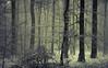 White (Netsrak) Tags: atmosphäre baum bäume eifel europa europe februar forst landschaft natur nebel schnebel schnee stimmung wald atmosphere fog forest landscape mist mood nature snow tree trees woods eu meckenheim nordrheinwestfalen deutschland de