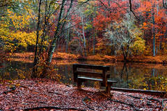 Serenity (Riddhish Chakraborty) Tags: serene color outdoor nature landsacpe fall autumn forest hike observation relax hiking creek sweetwater park foliage leaves yellow rust reflection