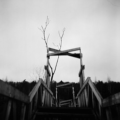 ..a crooked bridge.. (VelannaRay) Tags: bw black blackandwhite film filmphoto wood wander autumn abstract nature landscape concept countryside lines tree bridge outdoor deep пленка атмосфера абстрактное настроение мост чб чернобелое осень монохром линии