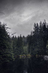 Rice Lake (RomainL_CA) Tags: vancouver bc canada vancity british coloumbia raincouver autumn 2017 forest tree pine leave leaf trail hike north water blue rice lake lynn valley calm pines cloudy wood cloud landscape fog