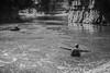 swim now (jellamalo) Tags: nature hike river adventure blakandwhite