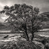 tree (prajpix) Tags: sepia scotland glen valley strath nature highlands invernessshire